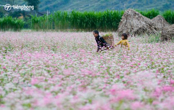 Du lịch Hà Giang mùa nào đẹp?