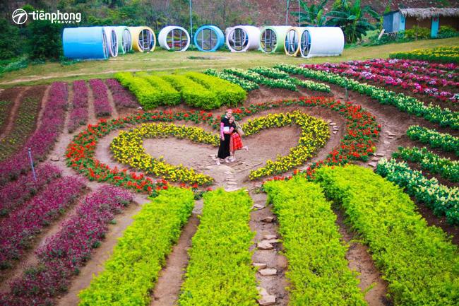 du lịch Mai Châu Mộc Châu mùa cải trắng
