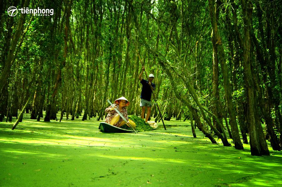 Kinh nghiệm du lịch 6 tỉnh Miền Tây - Rừng tràm Trà Sư