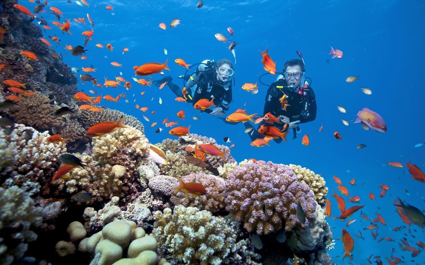 du lịch nhà trang đà lạt vịnh san hô