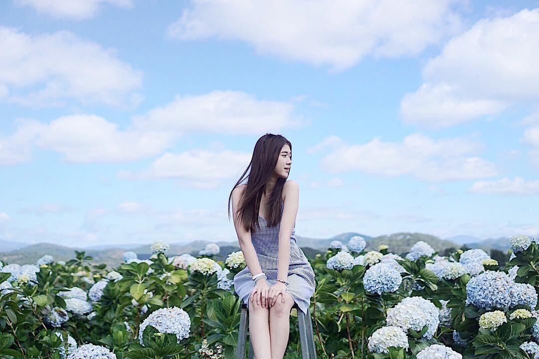 Du lịch Đà Lạt check in hoa cẩm tú cầu đẹp thần sầu