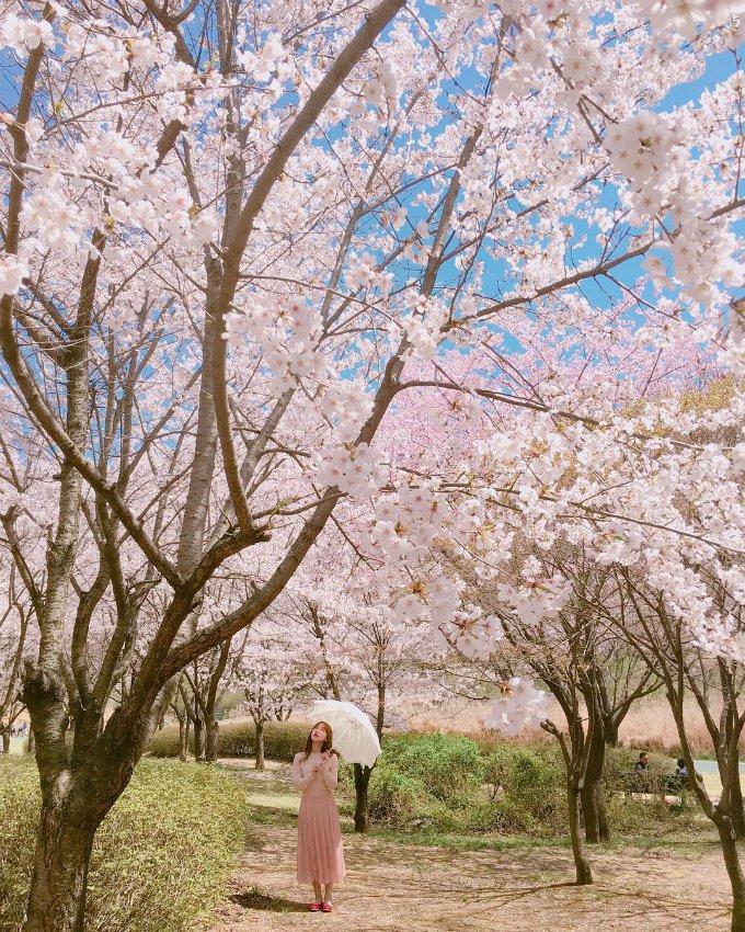 Du lịch Hàn Quốc mùa nào đẹp - Tiên Phong Travel