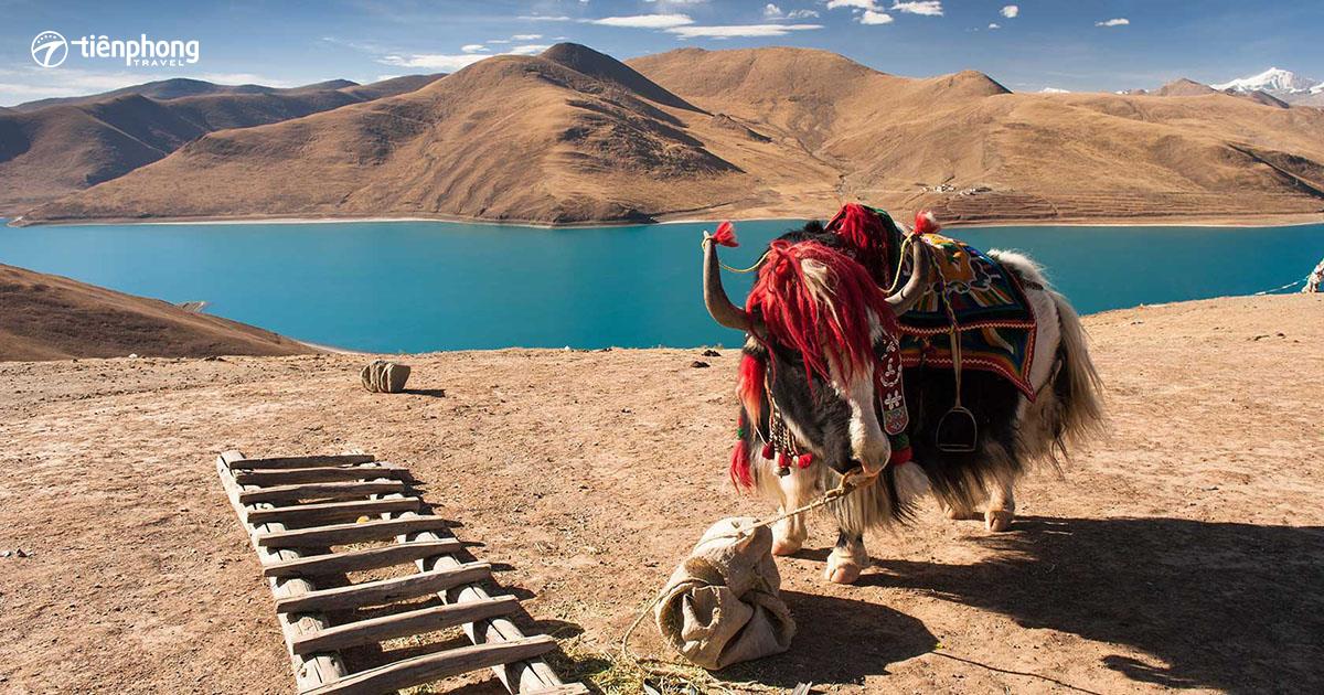 Du lịch Tây Tạng - Thưởng thức đặc sản thịt bò khô Tây Tạng