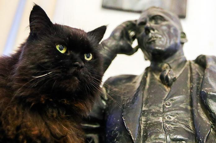 Những chú mèo làm bảo vệ tại các bảo tàng