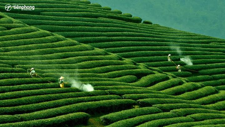 Du lịch Mộc Châu - đồi chè xanh mướt