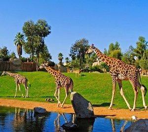 Zoo Safari Park- Vườn thú lớn nhất Đông Nam Á tại Quy Nhơn