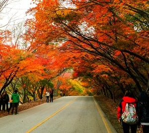Tour du lịch Hàn Quốc – tham quan xứ đại Hàn