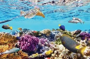 Điểm du lịch Thái Lan: Đảo san hô coral island