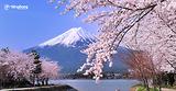 |Du lịch Nhật Bản| Các mùa hoa gây thương nhớ ở Nhật Bản
