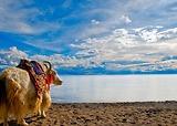 Khám phá Tây Tạng huyền bí cùng hoa hậu du lịch thế giới Huỳnh Vy | Tiên Phong Travel