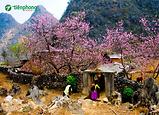 |Tour Hà Giang| Du lịch Hà Giang mùa nào đẹp nhất