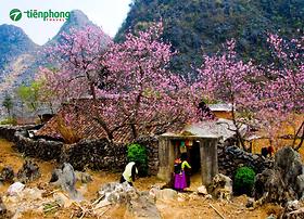  Tour Hà Giang  Du lịch Hà Giang mùa nào đẹp nhất