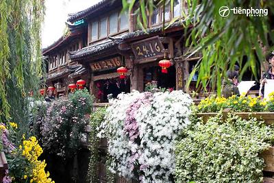 |Du lịch Lệ Giang| Đi Lệ Giang mùa nào đẹp nhất?