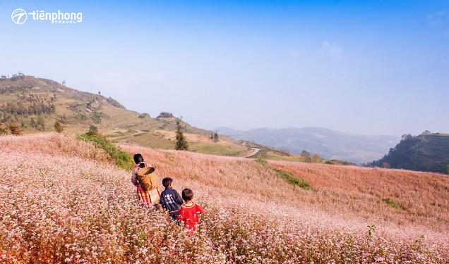 Thông tin mới nhất - Lễ hội hoa Tam Giác Mạch Hà Giang 2017