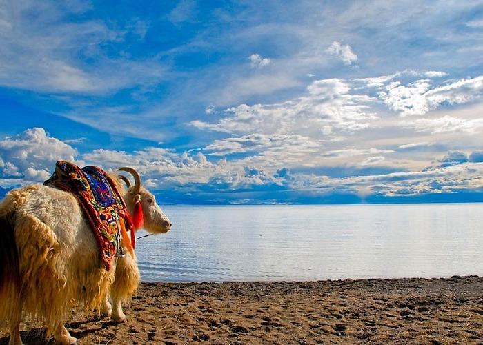 Khám phá Tây Tạng huyền bí cùng hoa hậu du lịch thế giới Huỳnh Vy   Tiên Phong Travel