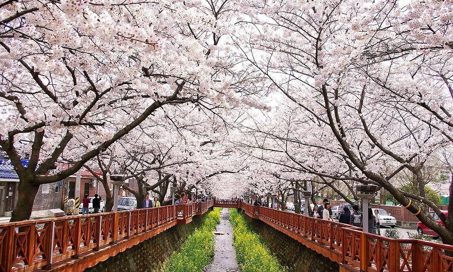 Du lịch Hàn Quốc: Seoul-Nami-Namsan Tower công viên hoa anh đào Yeouido 5 ngày 4 đêm bay Jeju Air