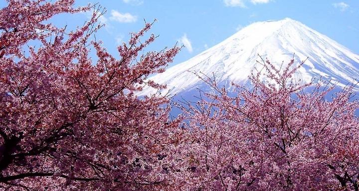 Du lịch Nhật Bản mùa hoa anh đào 2017
